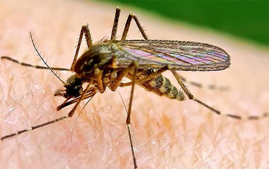 Ультрафиолетовые инсектицидные ловушки и их особенности применения